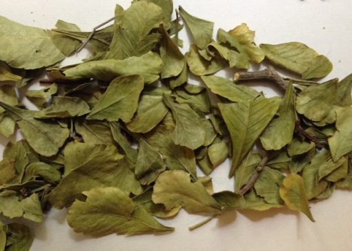 leaves of Taaibos